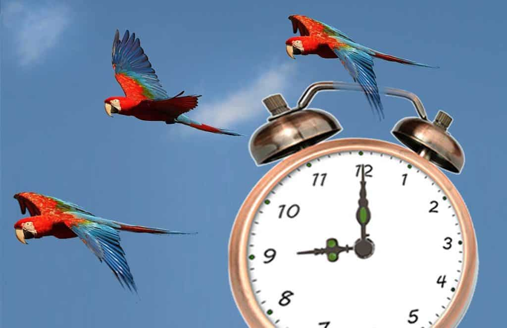 Best time of day to arrive at the San Diego Zoo is 9:00am as shown on this clock with the Zoo's parrots flying in the background.