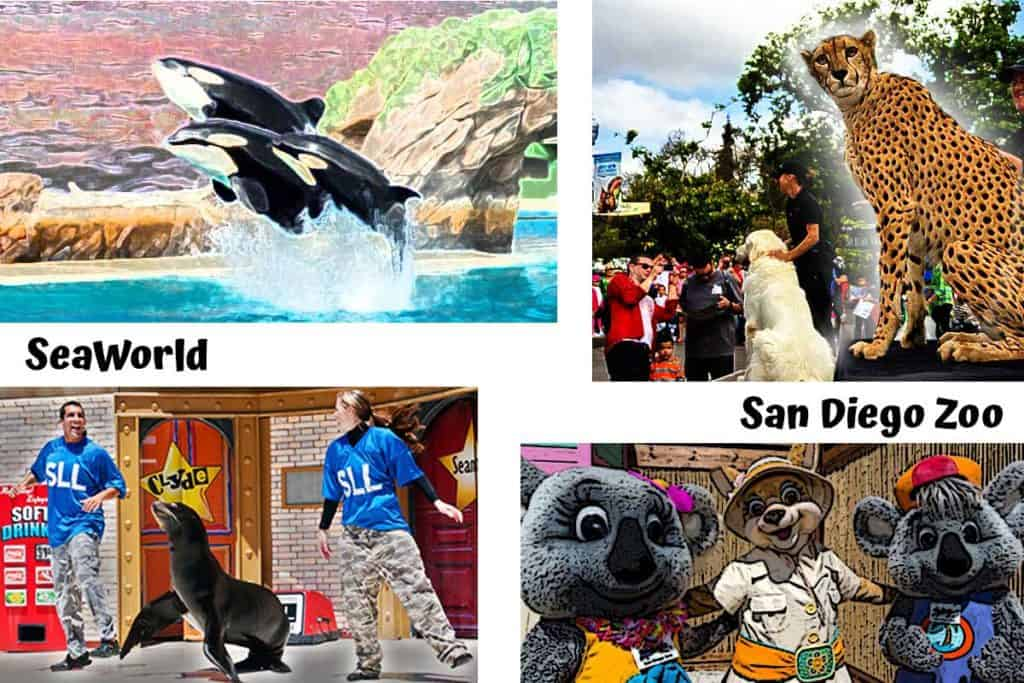 San Diego Zoo and SeaWorld Shows photo collage