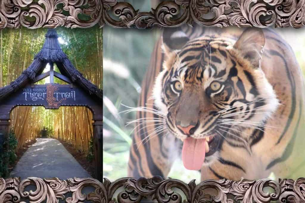 Photo collage of the entry to Tull Tiger Trail in San Diego Safari Park