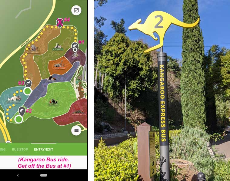 San Diego Zoo map.  Route for Kangaroo Bus ride from Stop #2 to Stop#1