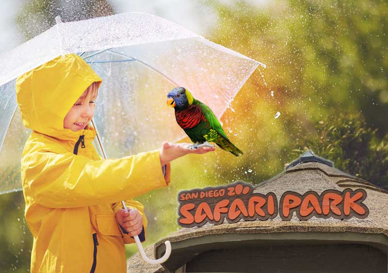 Visiting San Diego Safari Park in the rain is fun! Collage image by Nancy Ulrich.