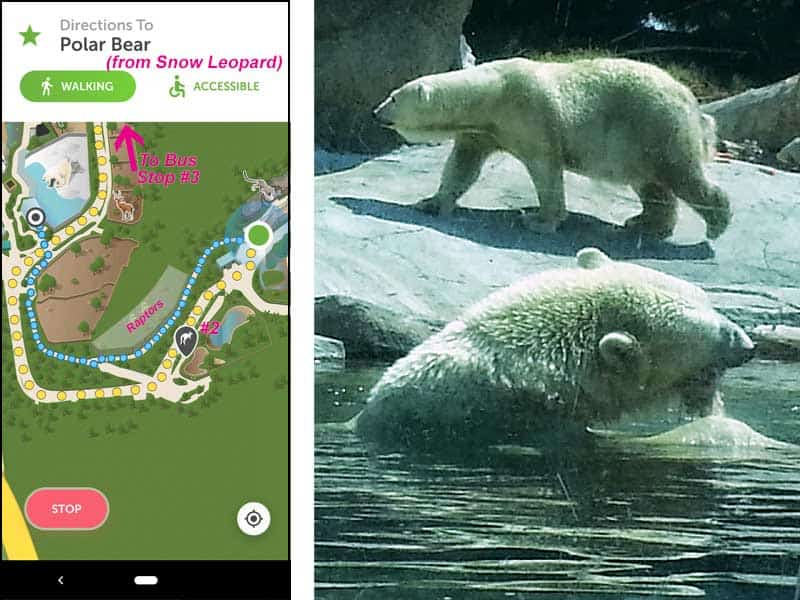 San Diego Zoo map. Route from snow leopards to polar bears