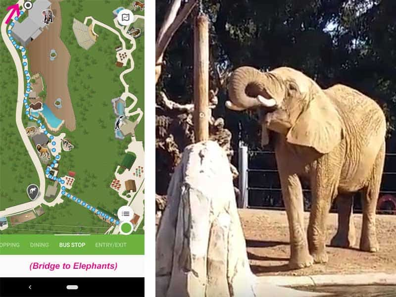 San Diego Zoo map. Route from from bridge elevator to the Elephant Care Center