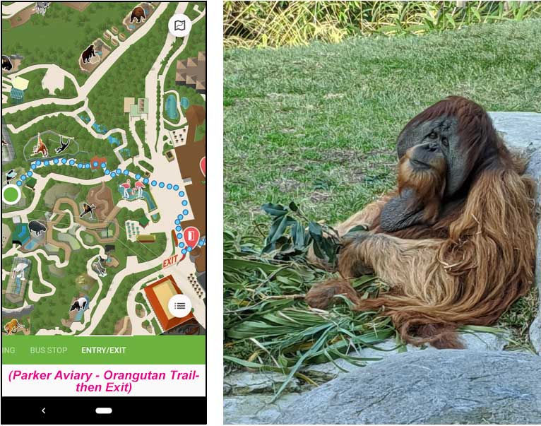 San Diego Zoo map route from Parker Aviary to the orangutans and the Zoo exit.