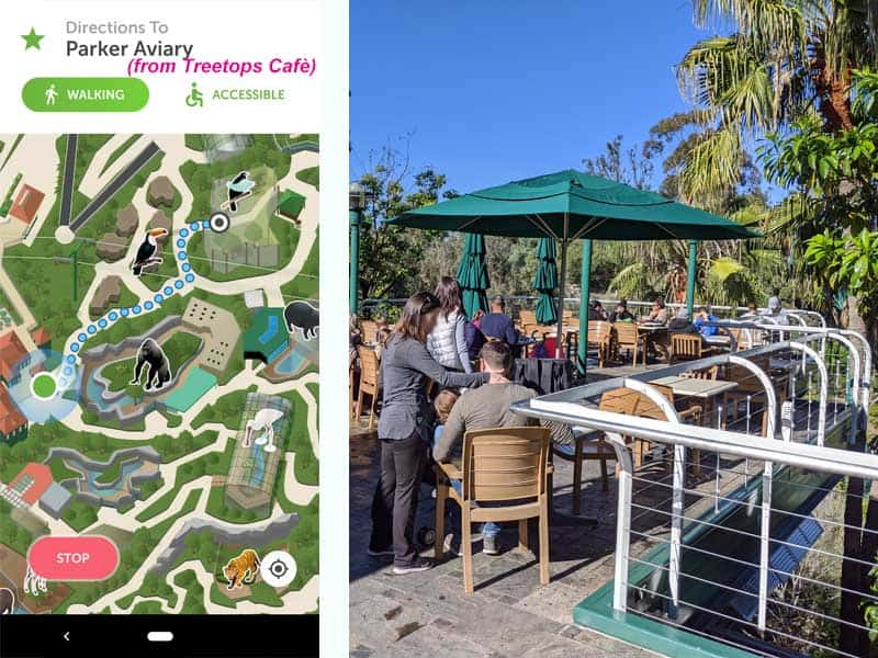 San Diego Zoo map. Route from Treetops Cafe to Parker Aviary