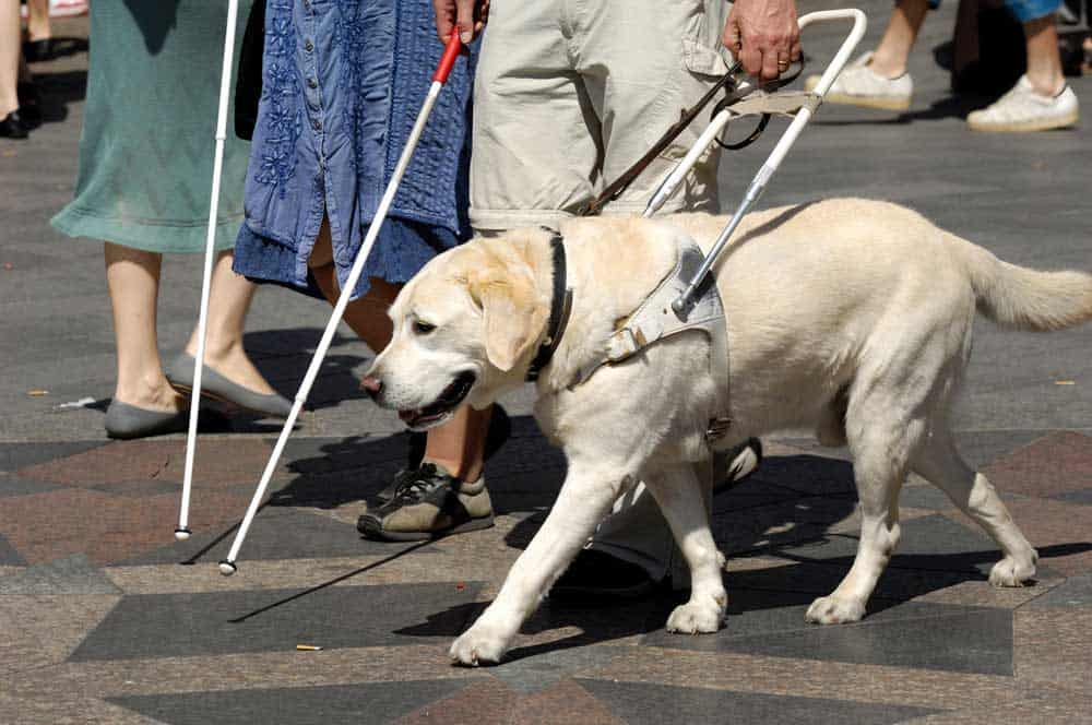 Only working service dogs are allowed inside San Diego Zoo
