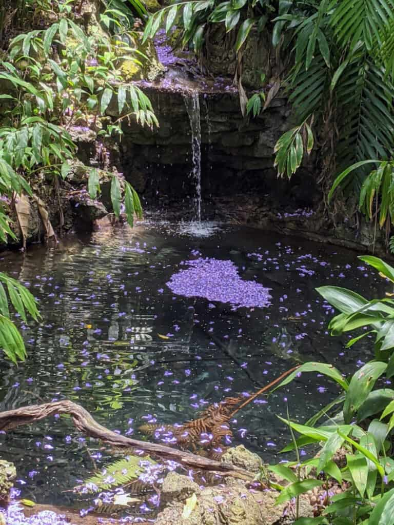 Waterfall on Fern Canyon Trail in San Diego Zoo with jacaranda blossoms in a pool below.
