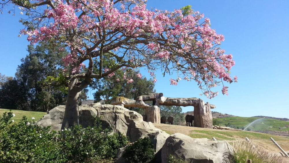 Elephants standing under their shade structure in Elephant Valley at San Diego Safari Park.