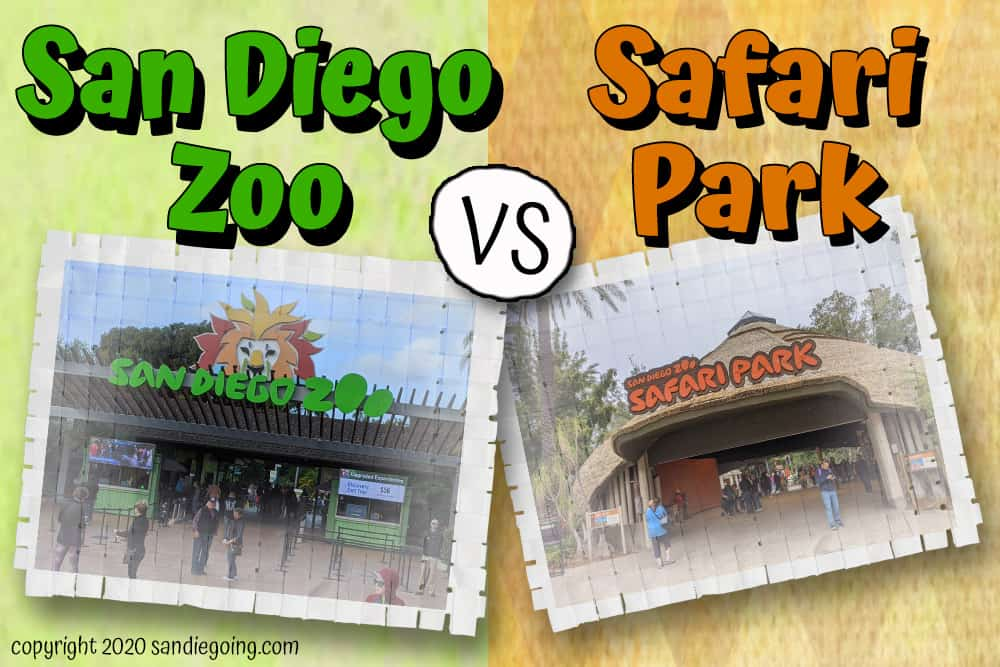 Which is better, San Diego Zoo or San Diego Safari Park?
