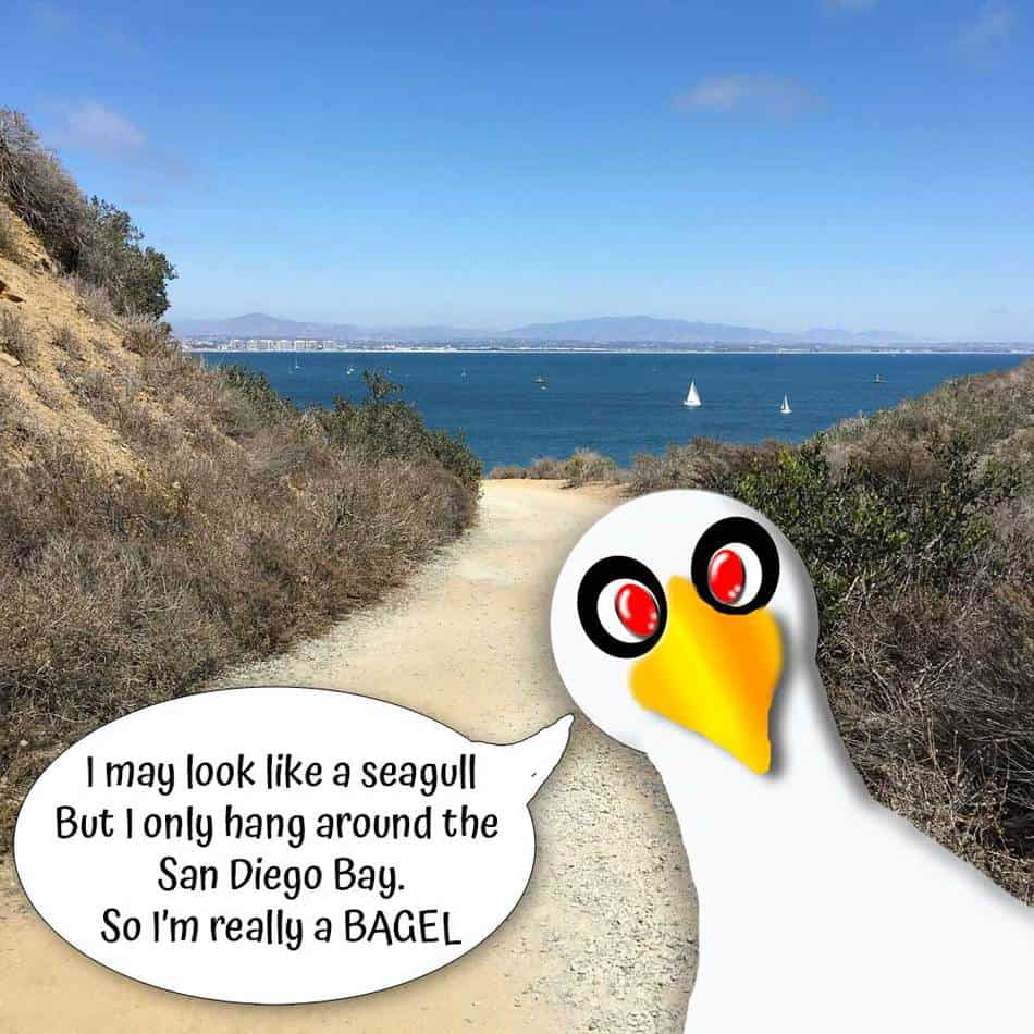 """Cabrillo National Monument Bayside Trail view with cartoon seagull saying, """"I may look like a seagull, but I only hang around the San Diego Bay. So I'm really a BAGEL."""