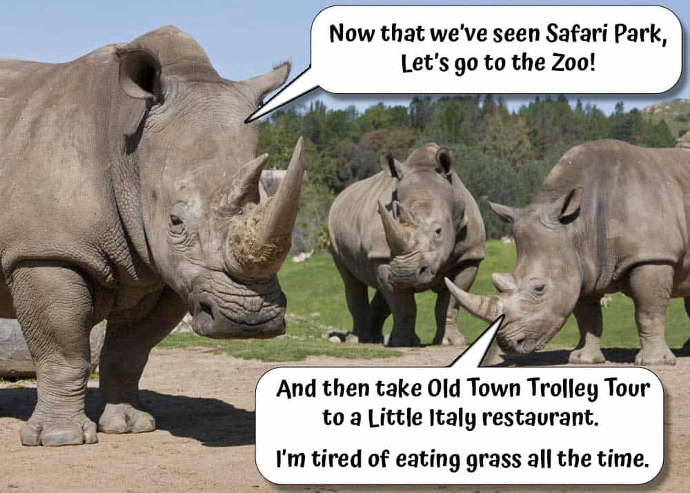 """Photo of Safari Park Rhino family. Speech bubbles saying """"Now that we've seen Safari Park, let's go to the Zoo! And then take Old Town Trolley Tour to a little Italy restaurant. I'm tired of eating grass."""""""