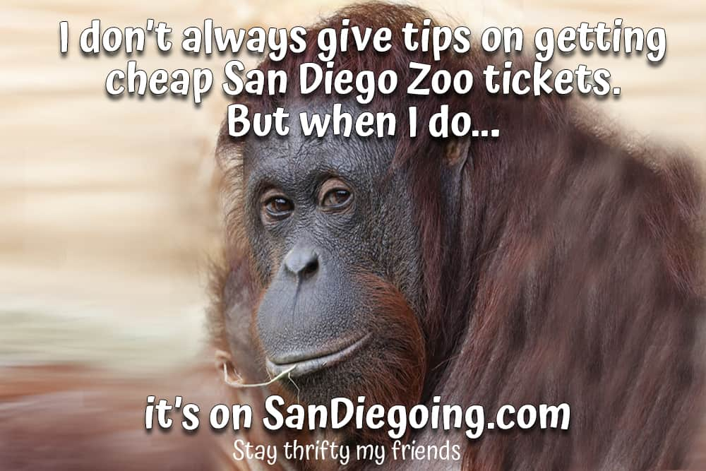 """Orangutan with white type which says, """"I don't always give tips on getting cheap San Diego Zoo tickets...But when I do, it's on SanDiegoing.com. Stay Thrifty My Friends."""""""