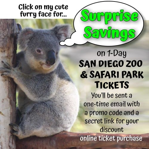 """Photo of koala saying"""" Click on my cute furry face for Surprise Savings on 1-Day San Diego Zoo and Safari Park tickets. You'll be sent a one-time email with a promo code and a secret link for your discount online purchase."""""""