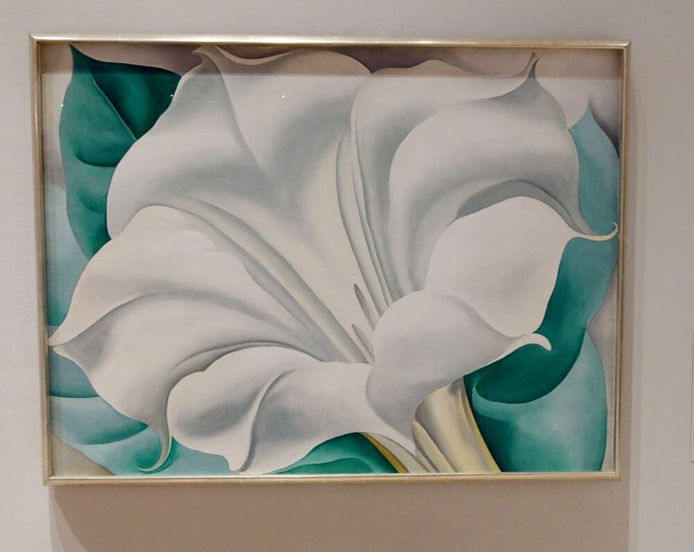 """Georgia O'Keefe painting """"The White Flower"""" at San Diego Museum of Art in Balboa Park"""